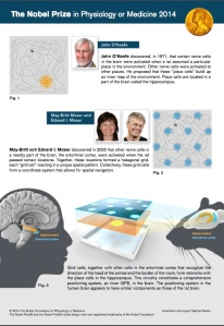(Infografía Cortesía nobelprize.org)